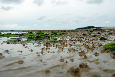 Strand am Hedehusumer Kliff