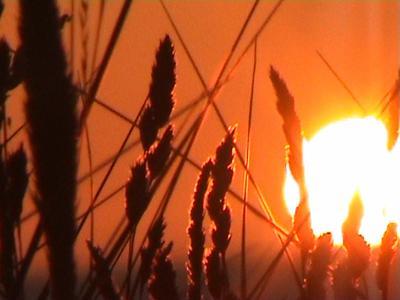 """""""Sonnenbrand"""" auf Rügen"""