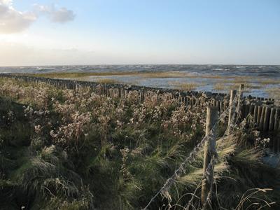 Neulandgewinnung / Naturschutzgebiet am Rand von Cuxhaven-Duhnen