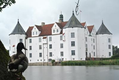 Schloss Glücksburg und Eiderente