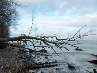 Winterimpression auf Rügen