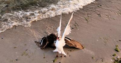 Streit am Strand