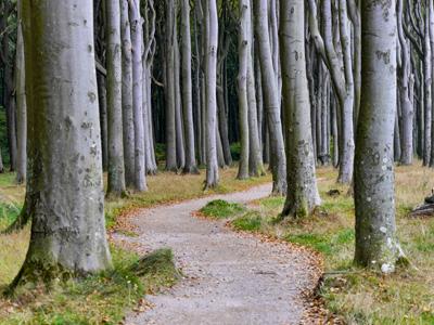 Geisterwald bei Nienhagen