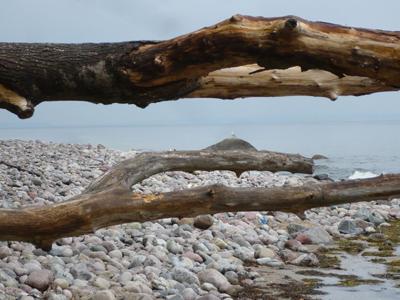 Naturstrand nahe Sellin auf der Insel Rügen