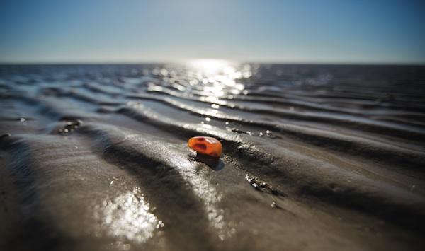 Das Gold des Meeres