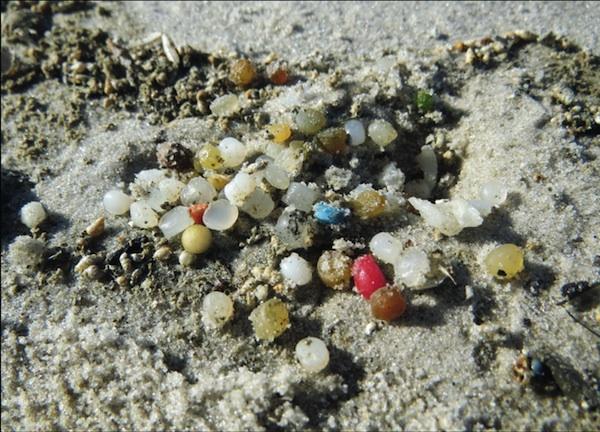 Plastikfreie Nordseeküste