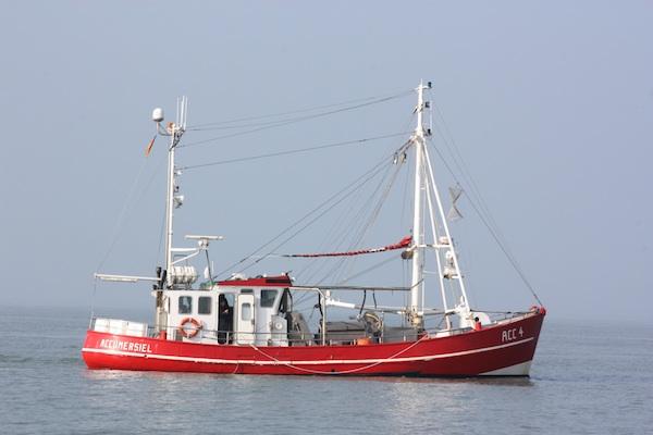 Nachhaltigkeitssiegel für Krabbenfischerei