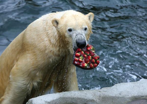 Hannover hat den besten Zoo Deutschlands