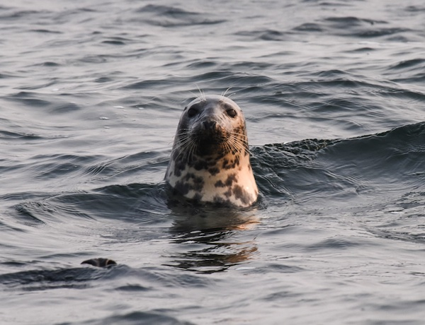 Meeressäuger melden