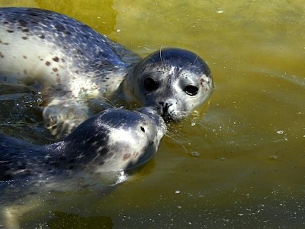 Liebesrausch im Weltnaturerbe Wattenmeer