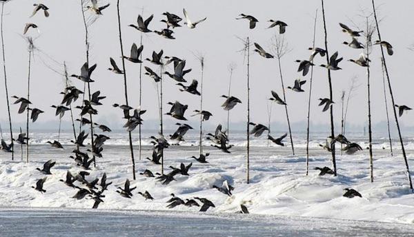 Zugvogeltage und Frisian Summer