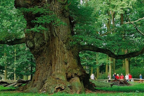 Waldgebiet des Jahres 2020