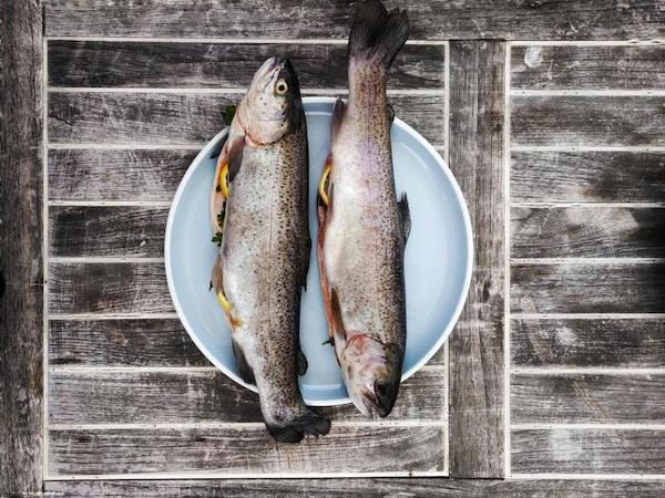 Welcher Fisch kann noch auf den Tisch